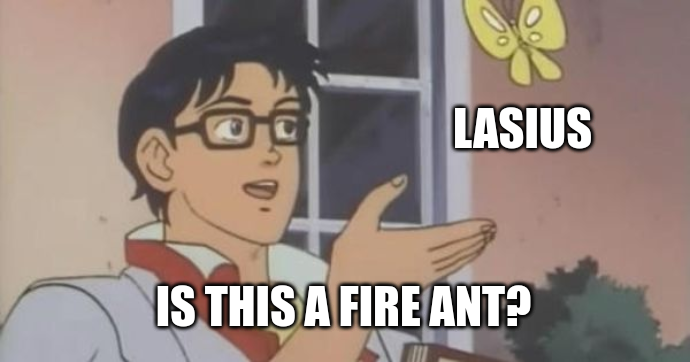 Is this a fire ant?