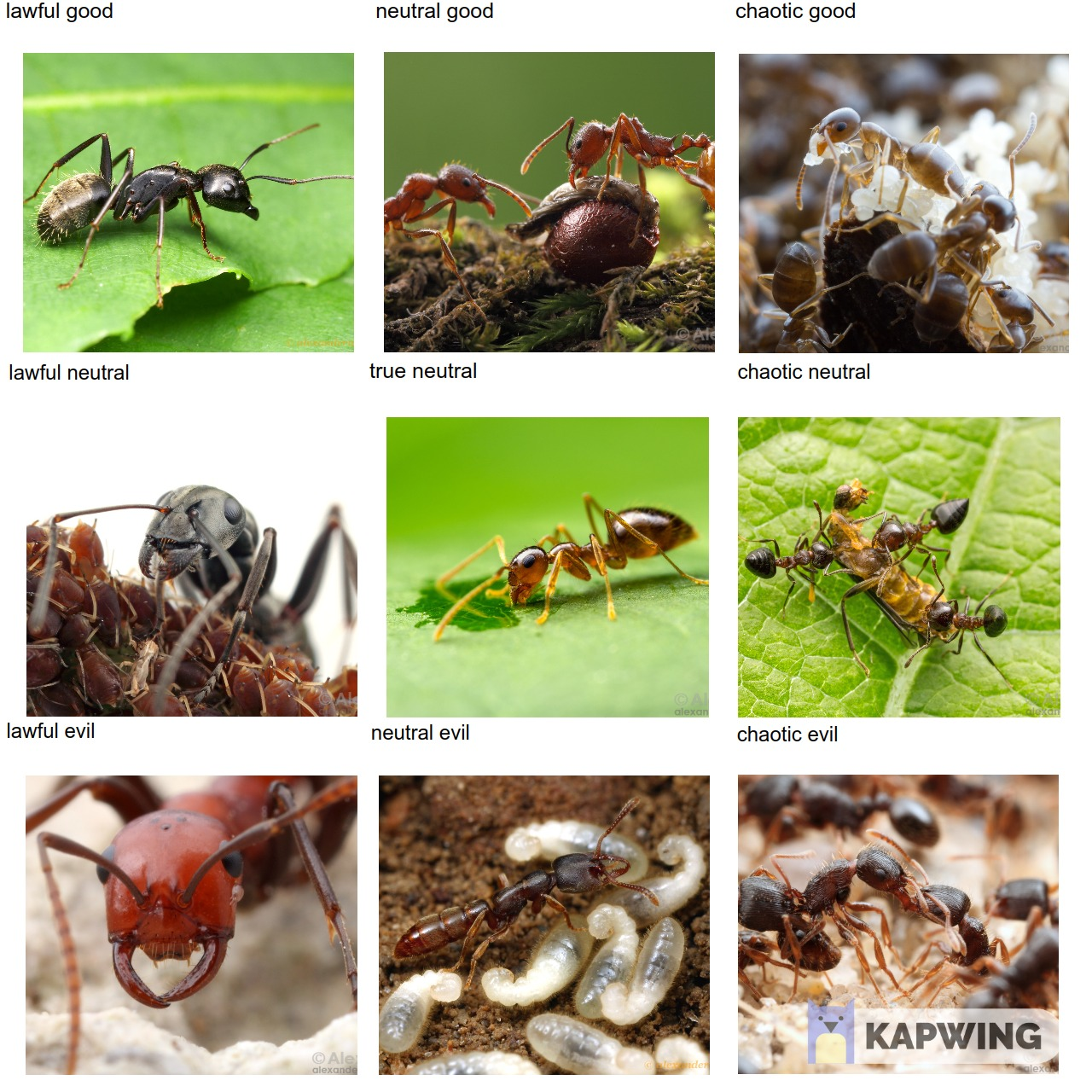 Ant Alignment Chart 2