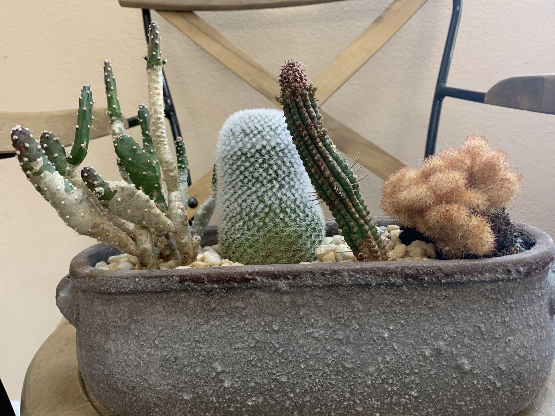 repeat cactus planter