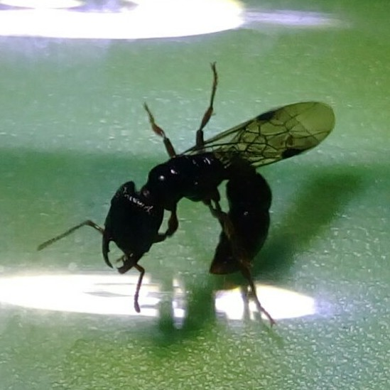 Queen Ants For Sale — Ants Everything