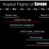 nuptial flights