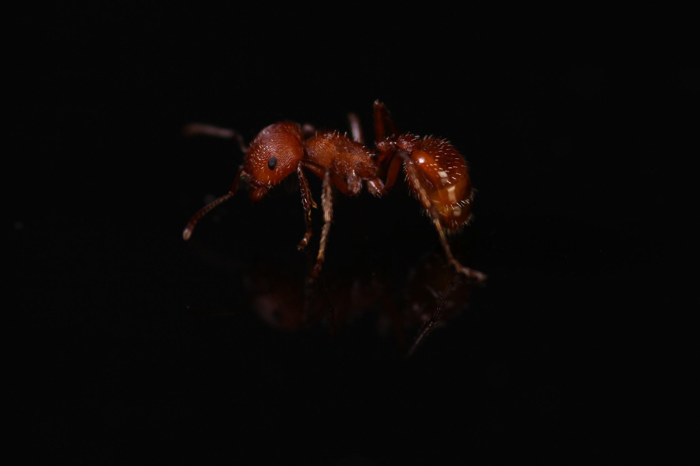 Ants4fun's Photo