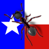 """List of words that contain """"ants"""" - last post by Ants_Texas"""