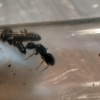 Medicine Hat area bug id re... - last post by AntJohnny