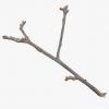 Dry_Twig's Photo