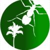 Tetramorium lanuginosum semi claustral or not. - last post by AntsSoutheast